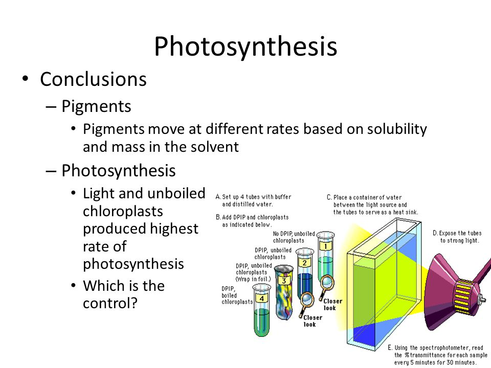 Photosynthesis Conclusions Pigments Photosynthesis