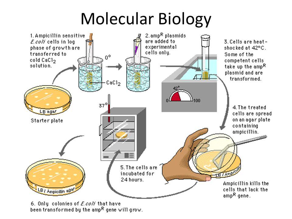 Molecular Biology