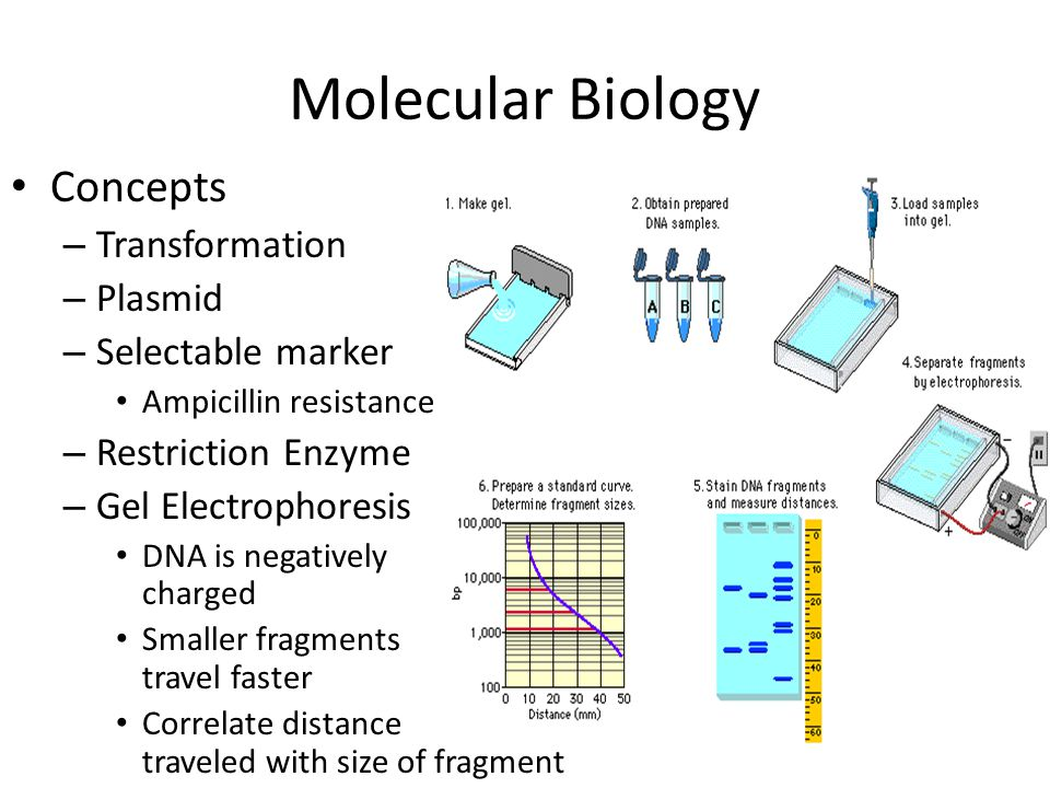 Molecular Biology Concepts Transformation Plasmid Selectable marker