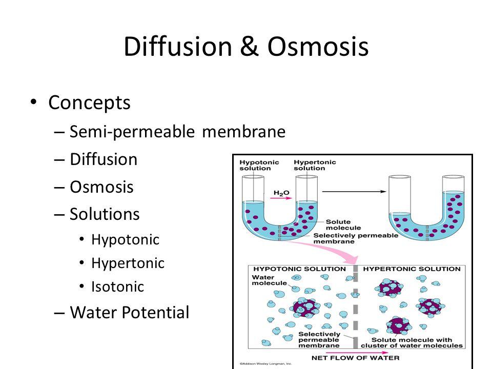 semipermeable membrane lab report