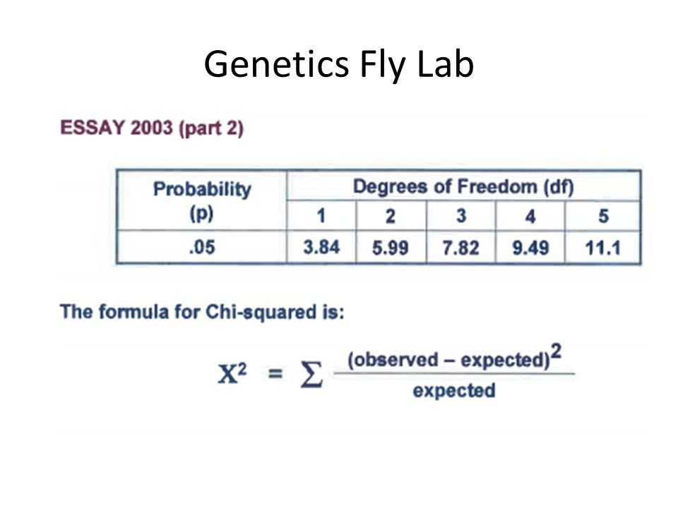 Genetics Fly Lab