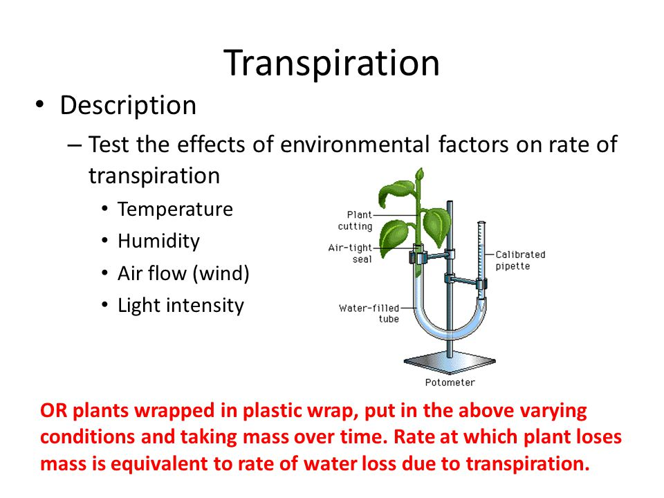 Transpiration Description