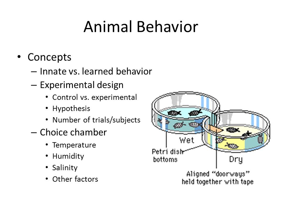 Animal Behavior Concepts Innate vs. learned behavior