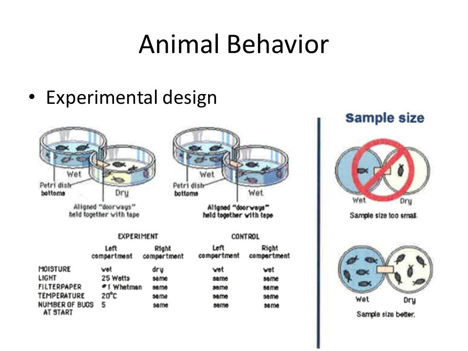Animal Behavior Experimental design