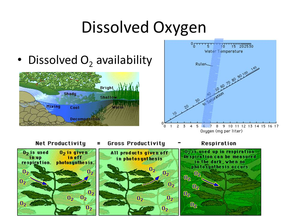 Dissolved Oxygen Dissolved O2 availability