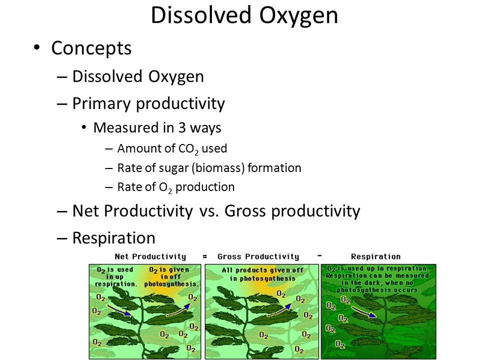 Dissolved Oxygen Concepts Dissolved Oxygen Primary productivity