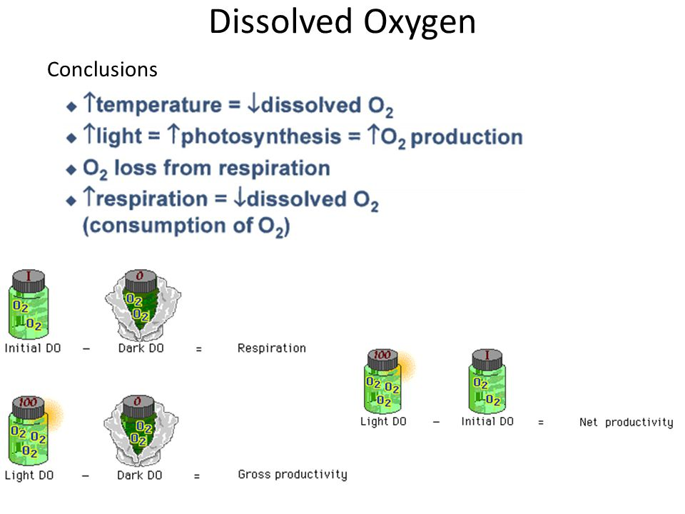Dissolved Oxygen Conclusions