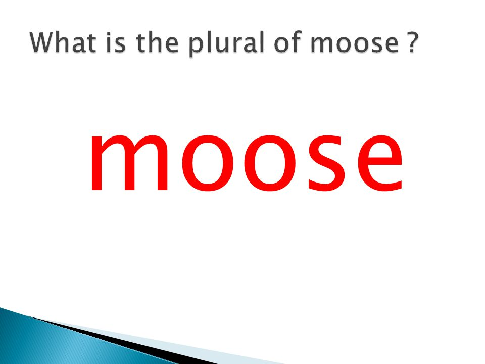 What is the plural of moose