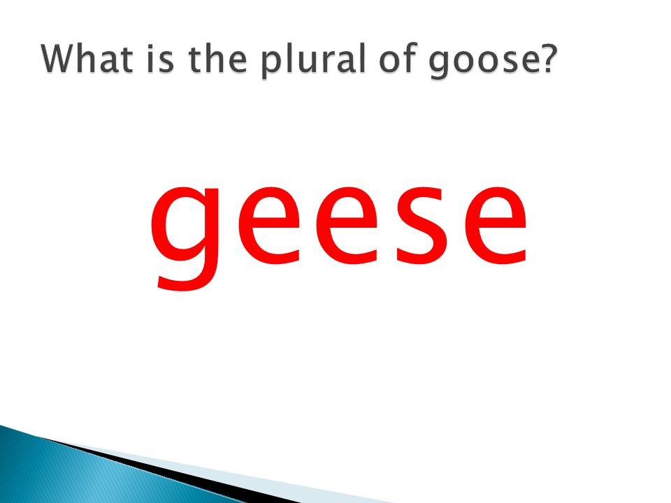 What is the plural of goose
