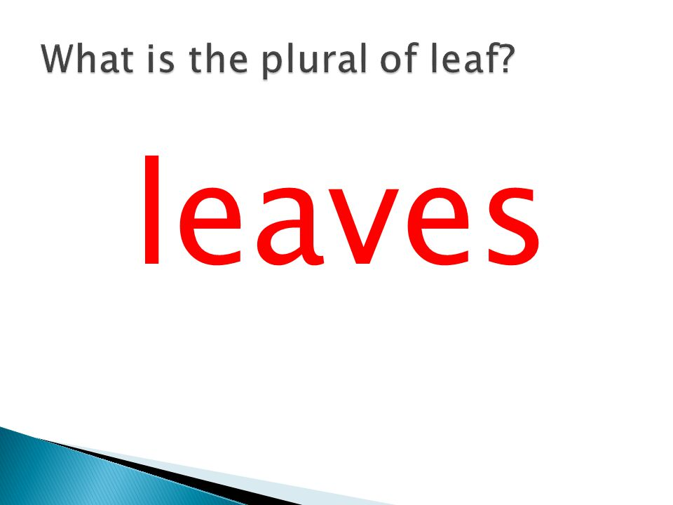 What is the plural of leaf