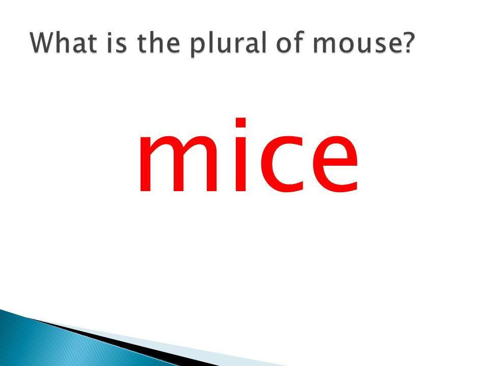 What is the plural of mouse