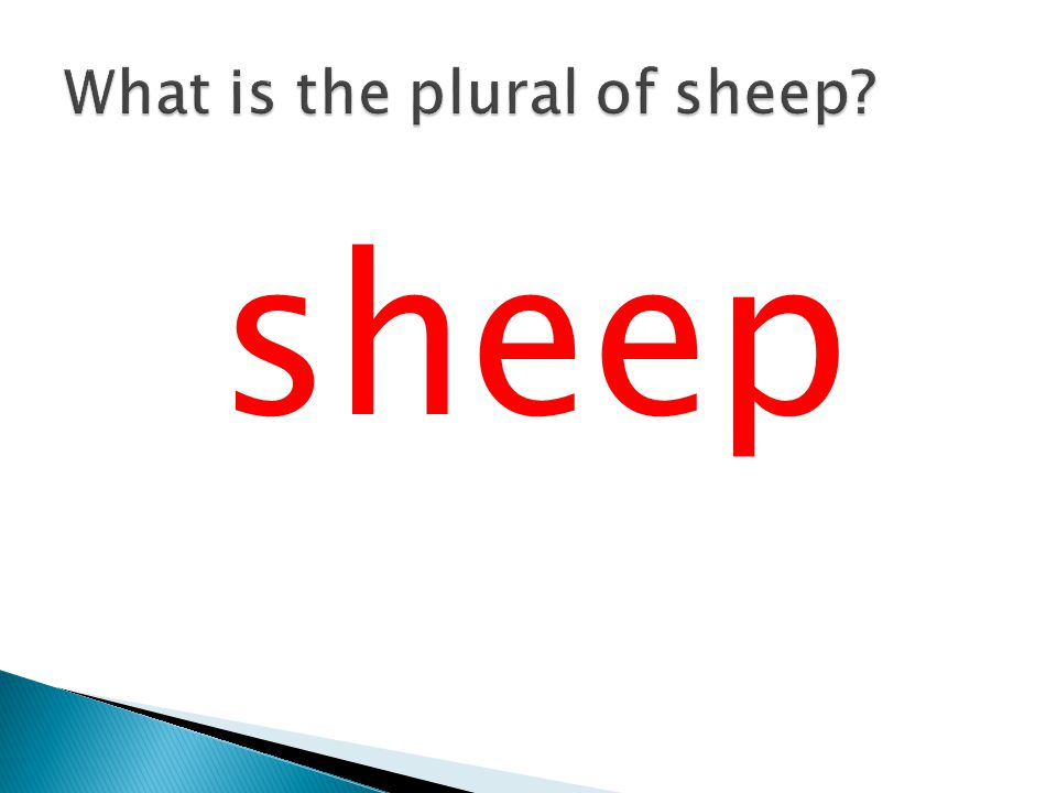 What is the plural of sheep
