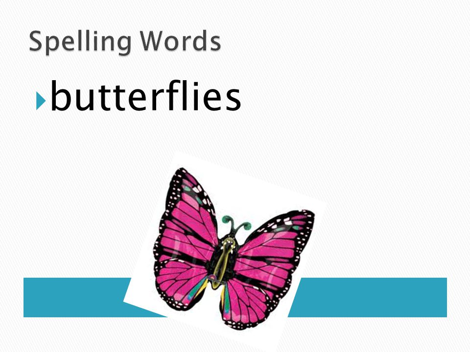 Spelling Words butterflies