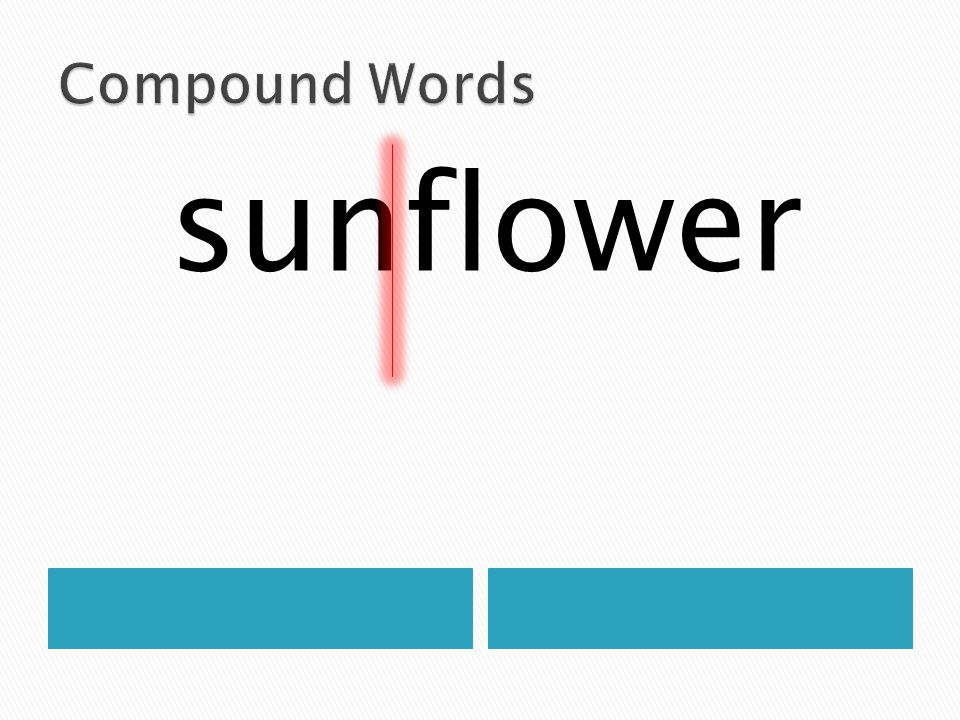Compound Words sunflower