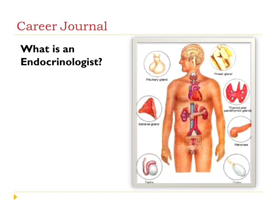 Career Journal What is an Endocrinologist