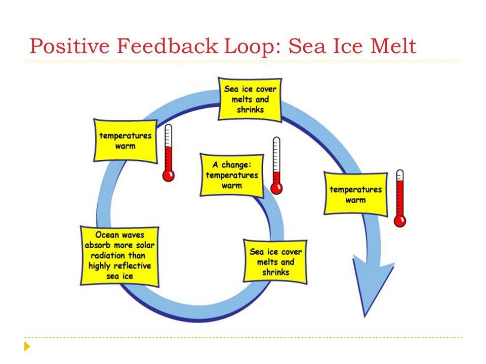Positive Feedback Loop: Sea Ice Melt