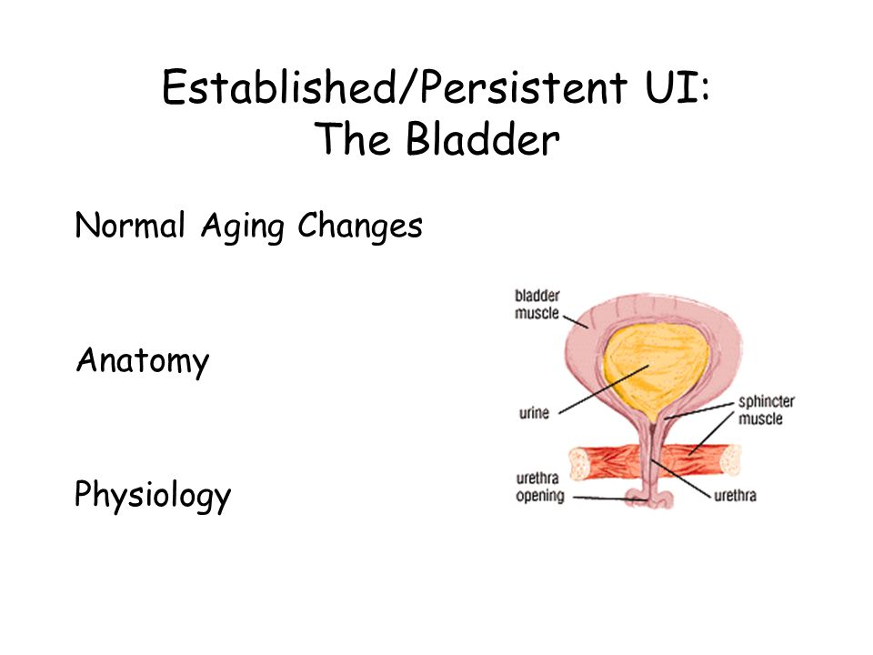Established/Persistent UI: The Bladder