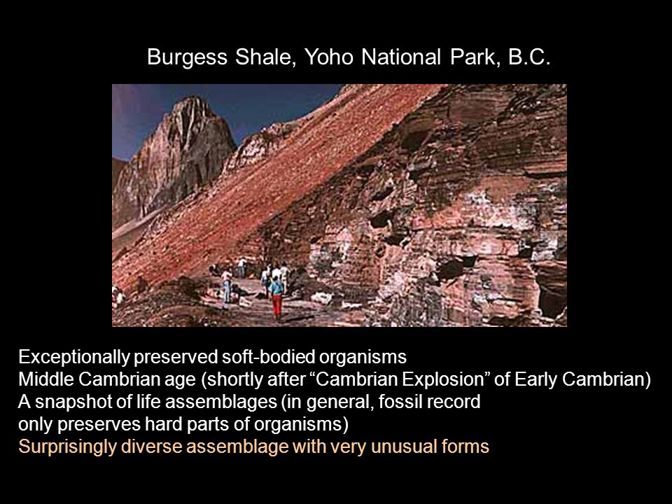 Burgess Shale, Yoho National Park, B.C.