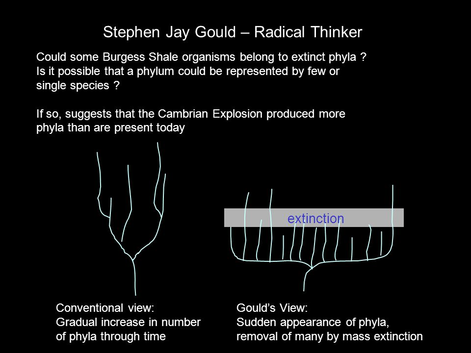 Stephen Jay Gould – Radical Thinker
