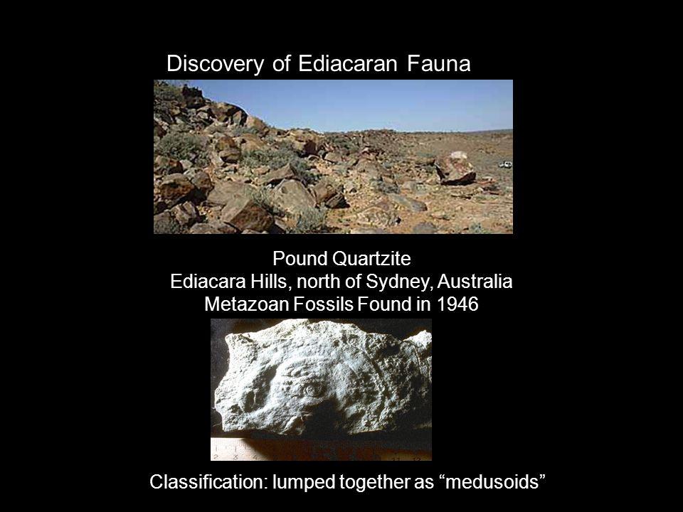 Discovery of Ediacaran Fauna