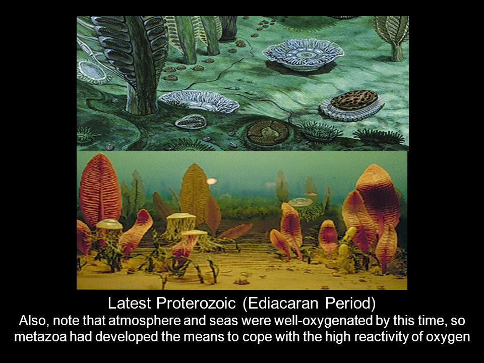 Latest Proterozoic (Ediacaran Period)