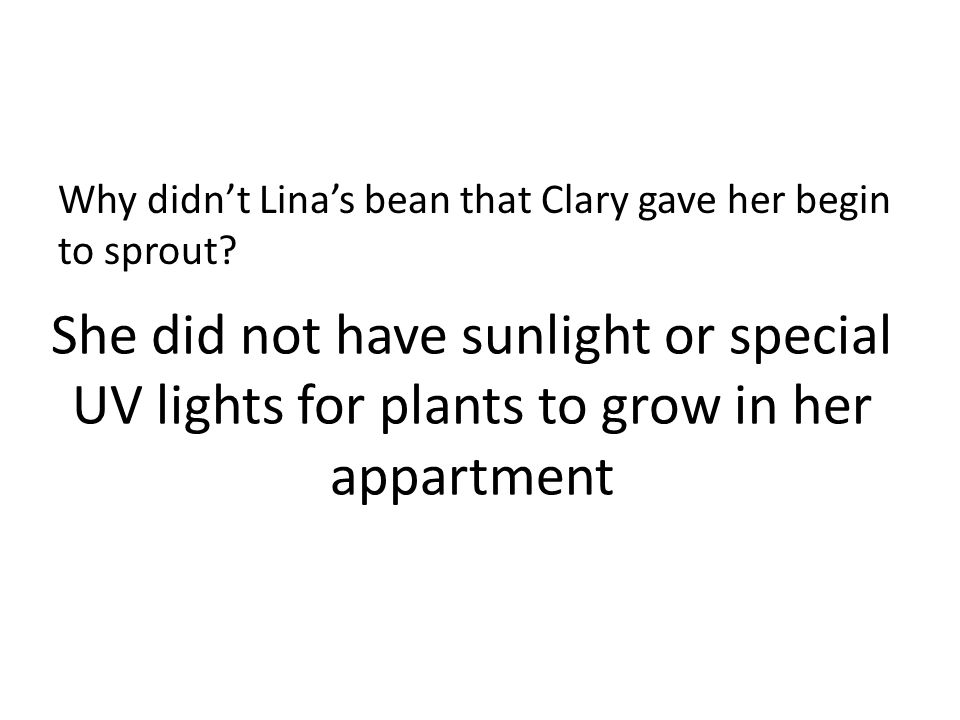 Why didn't Lina's bean that Clary gave her begin to sprout