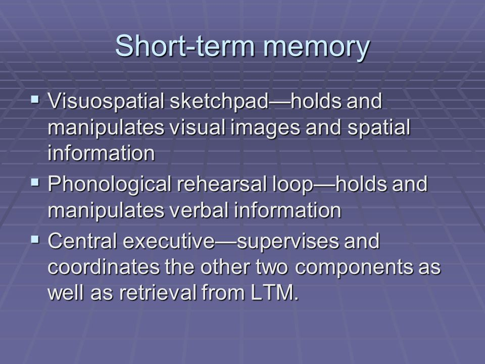 Short-term memory Visuospatial sketchpad—holds and manipulates visual images and spatial information.