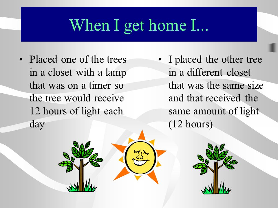 When I get home I... Placed one of the trees in a closet with a lamp that was on a timer so the tree would receive 12 hours of light each day.