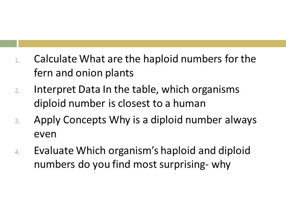 Calculate What are the haploid numbers for the fern and onion plants