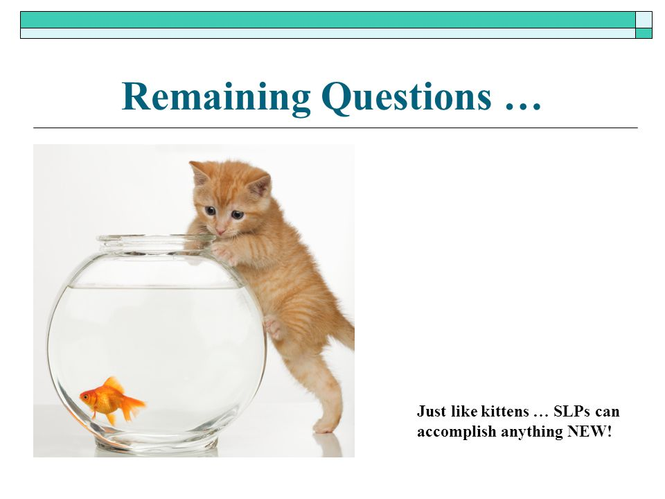 Remaining Questions … Just like kittens … SLPs can
