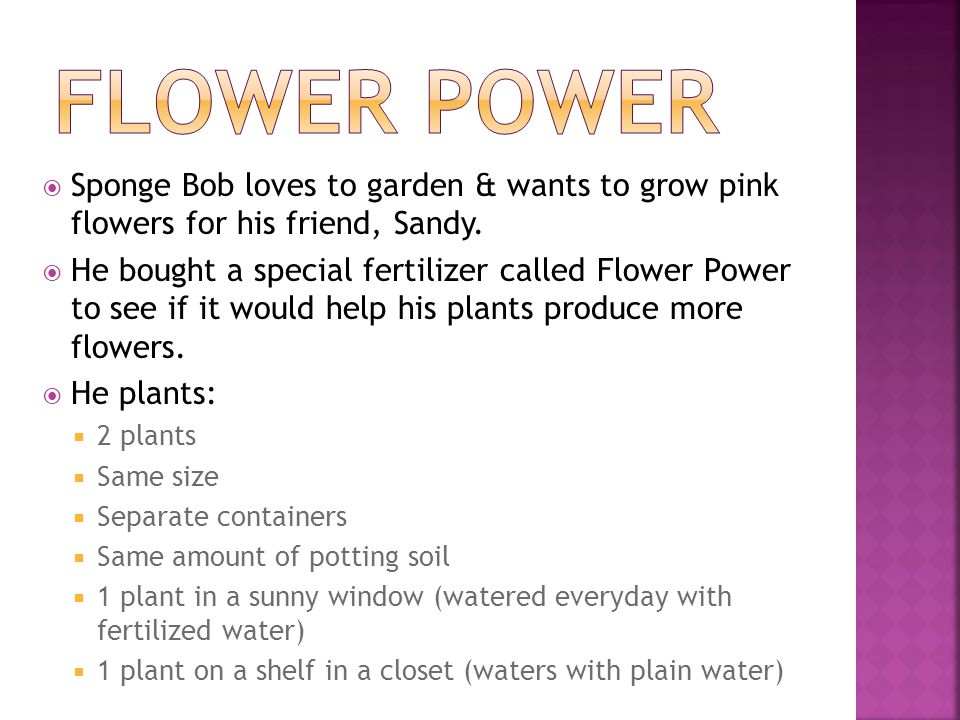 Flower Power Sponge Bob loves to garden & wants to grow pink flowers for his friend, Sandy.