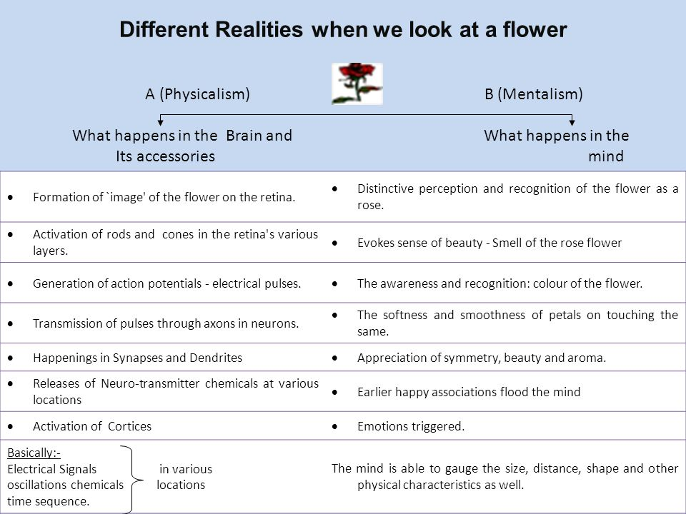 Different Realities when we look at a flower