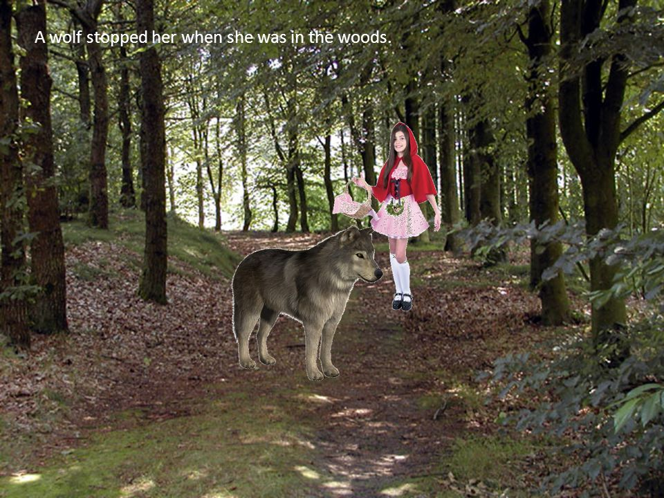 A wolf stopped her when she was in the woods.
