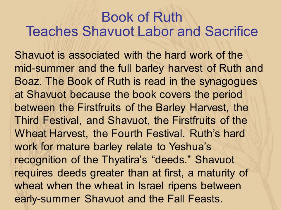 Book of Ruth Teaches Shavuot Labor and Sacrifice