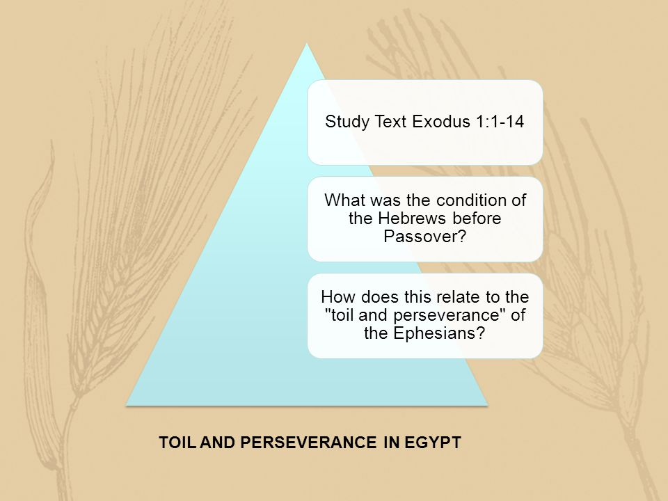 TOIL AND PERSEVERANCE IN EGYPT