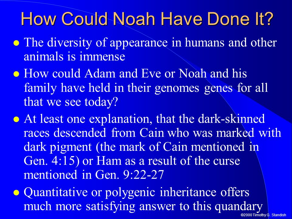 How Could Noah Have Done It