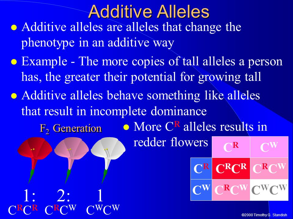 Additive Alleles Additive alleles are alleles that change the phenotype in an additive way.