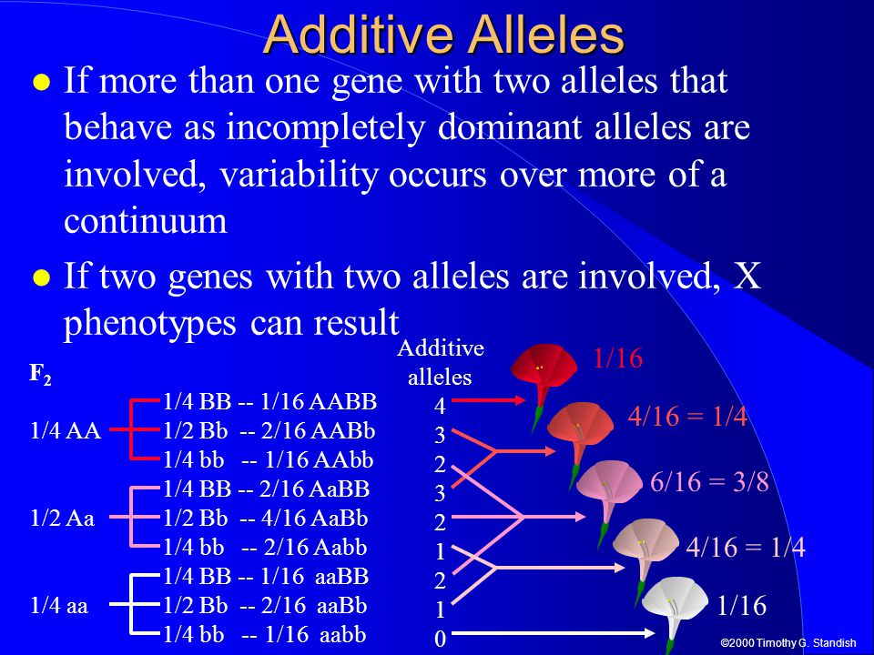 Additive Alleles