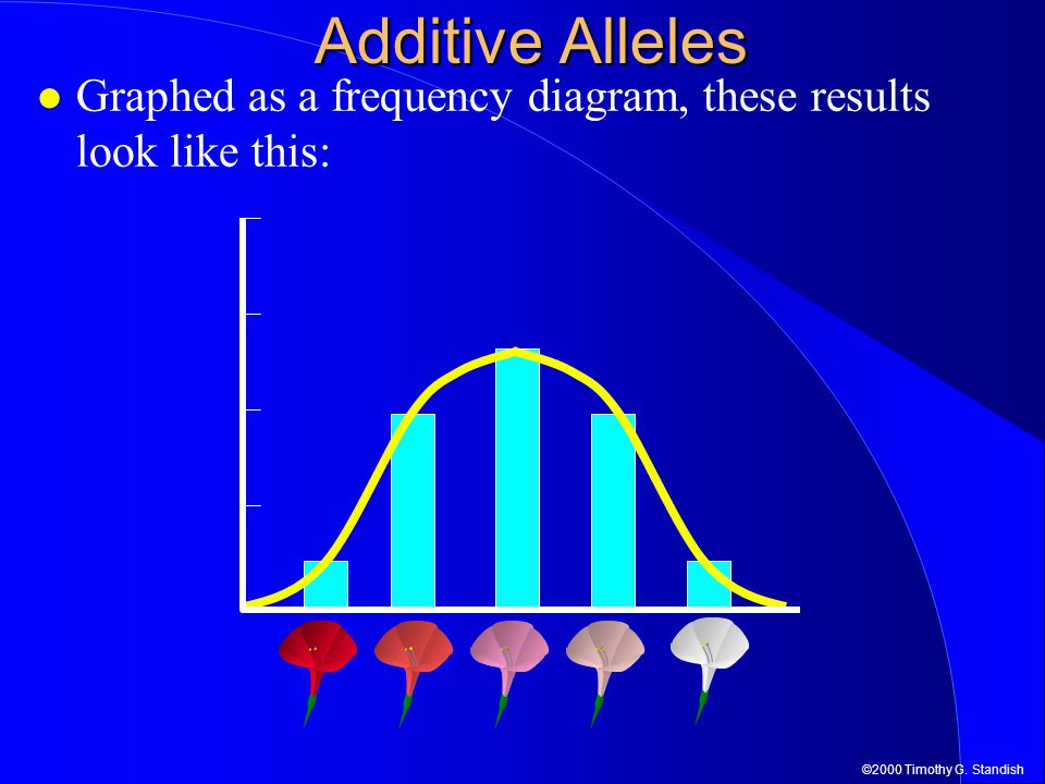 Additive Alleles Graphed as a frequency diagram, these results look like this: