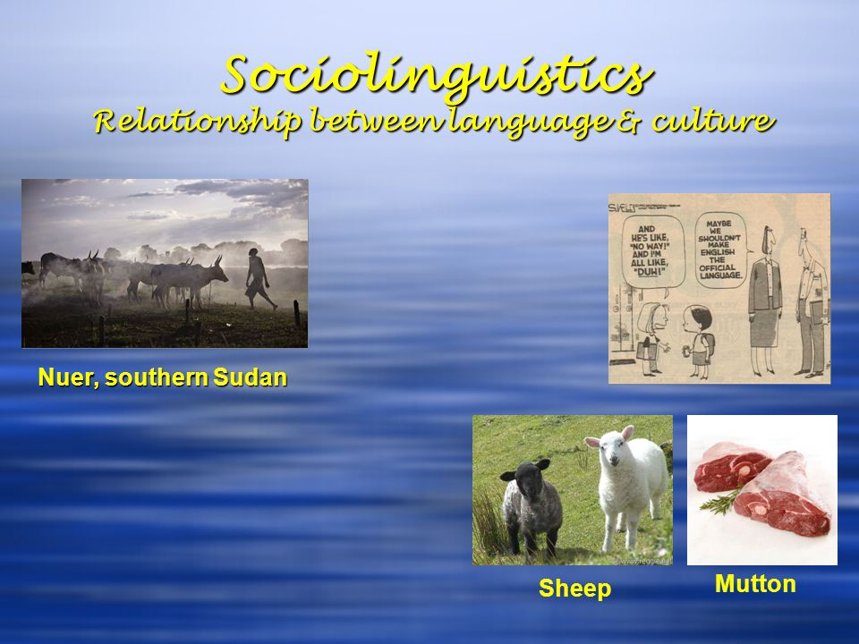 Sociolinguistics Relationship between language & culture