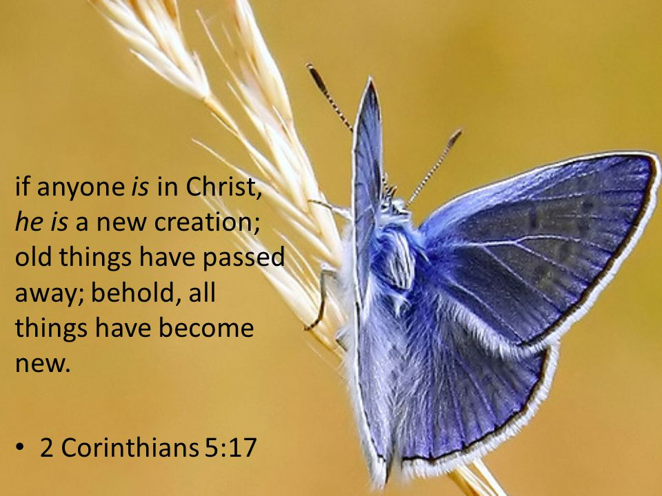 if anyone is in Christ, he is a new creation; old things have passed away; behold, all things have become new.