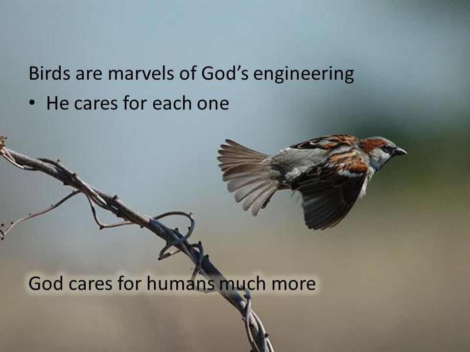 Birds are marvels of God's engineering He cares for each one