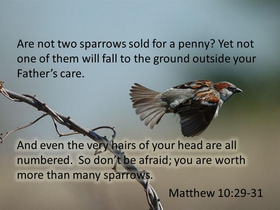 Are not two sparrows sold for a penny