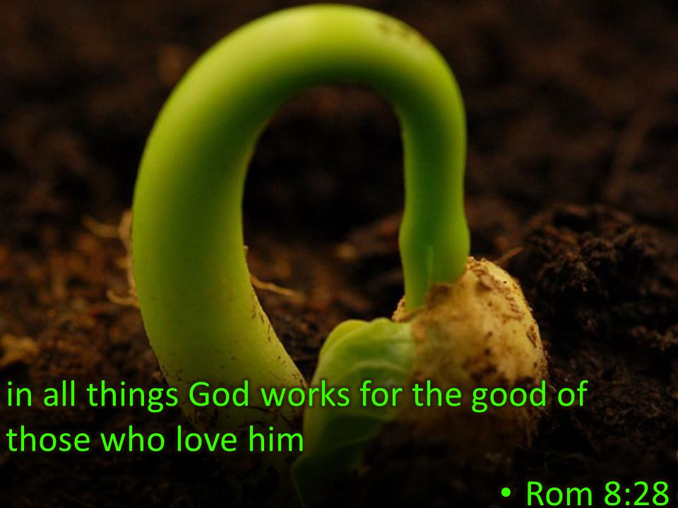 in all things God works for the good of those who love him