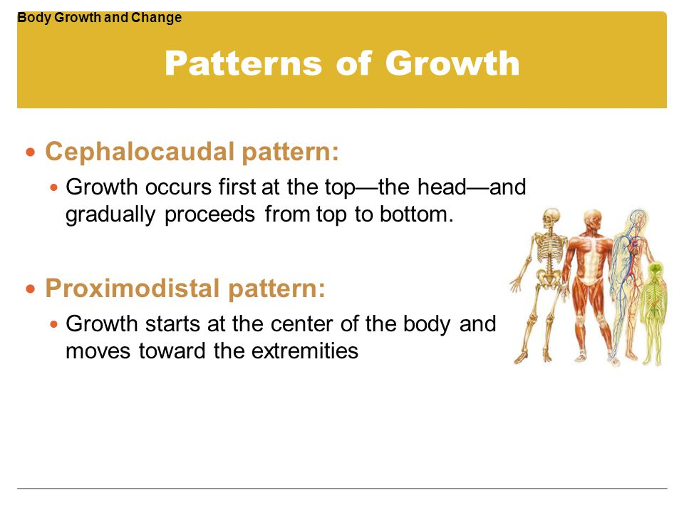 Patterns of Growth Cephalocaudal pattern: Proximodistal pattern: