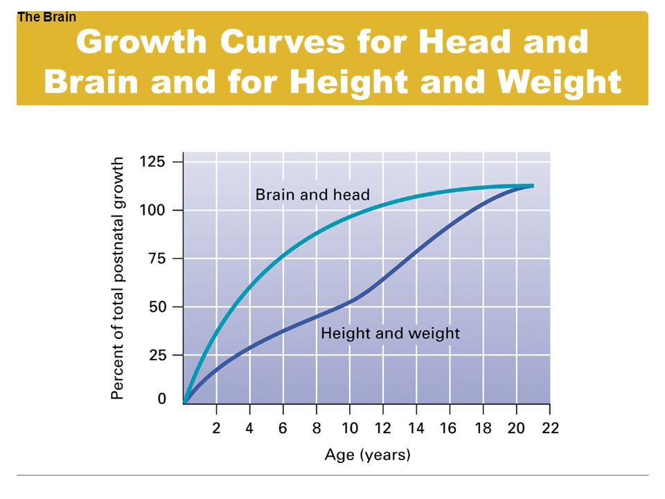 Growth Curves for Head and Brain and for Height and Weight