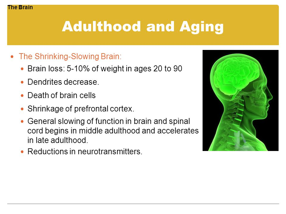 Adulthood and Aging The Shrinking-Slowing Brain: