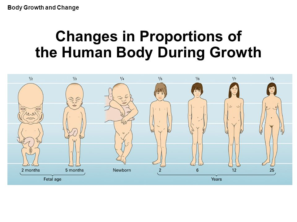 Changes in Proportions of the Human Body During Growth