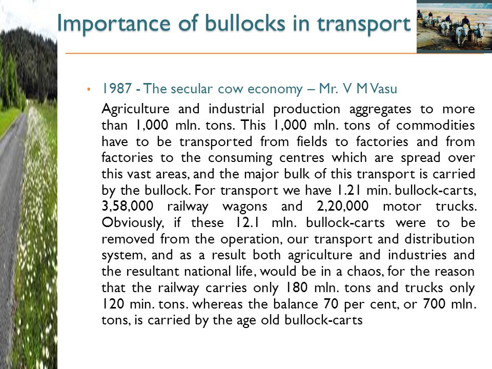 Importance of bullocks in transport