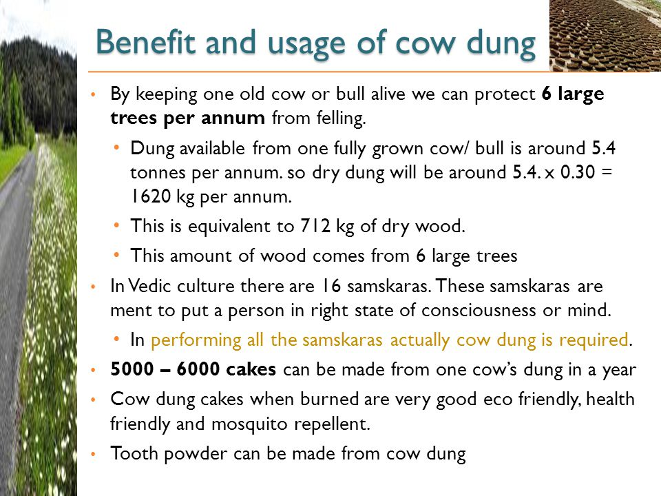 Benefit and usage of cow dung